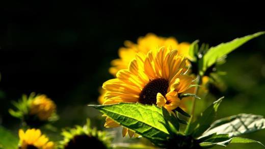 两口子幸福的话语经典句子 幸福正能量的句子经典